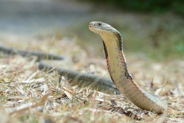 The Top 10 Most Poisonous Animal Species in the World   Les