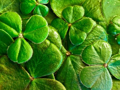 st patrick's day facts